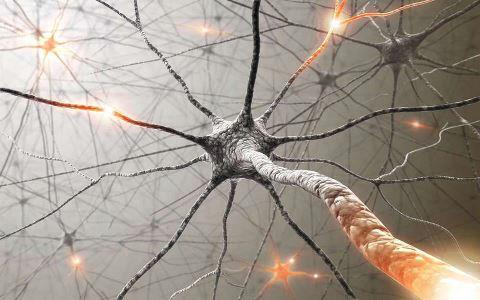 neuronas-celula